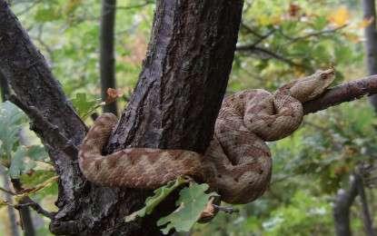 Kako se zaštititi od zmija?